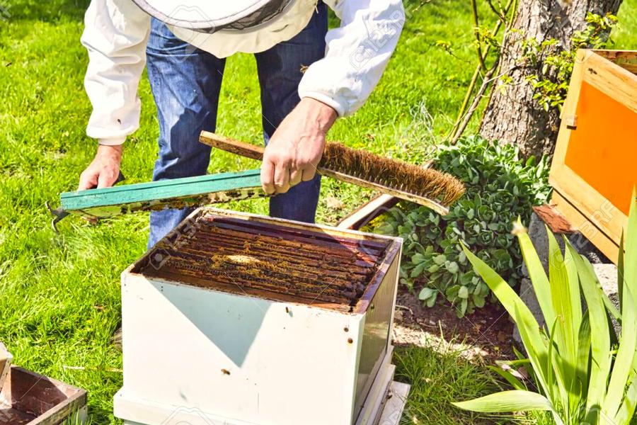 move bee hive